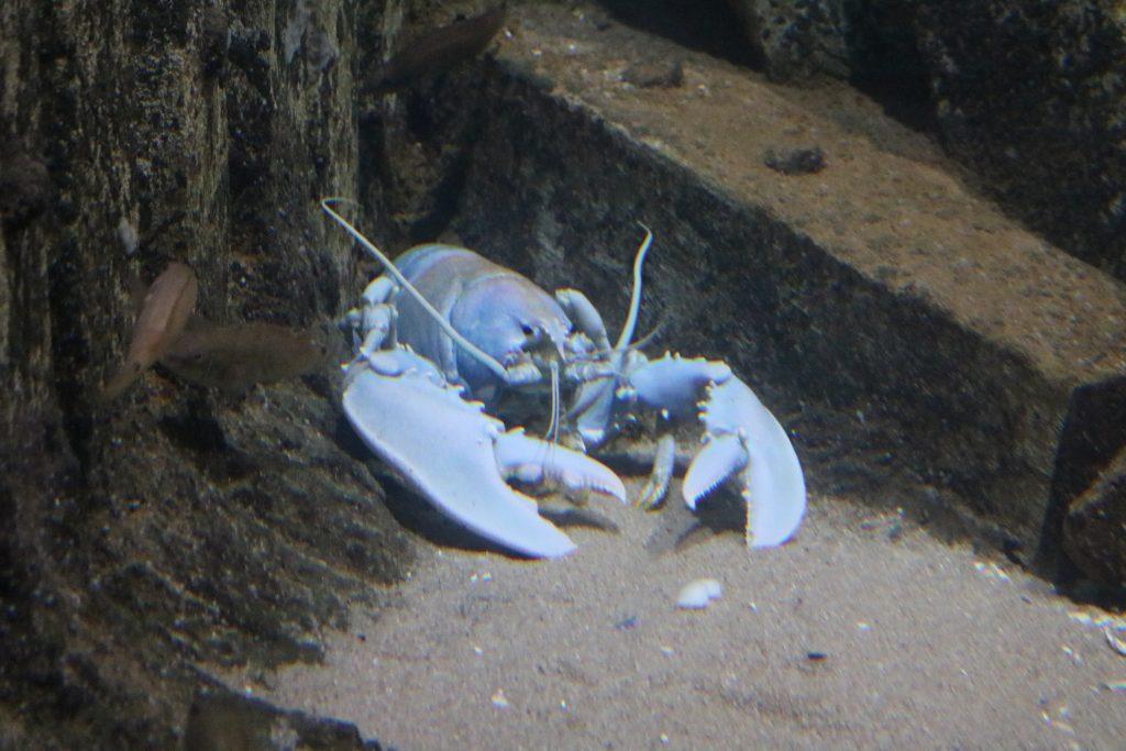 Sylt-Aquarium-24