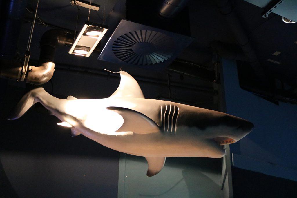Sylt-Aquarium-11