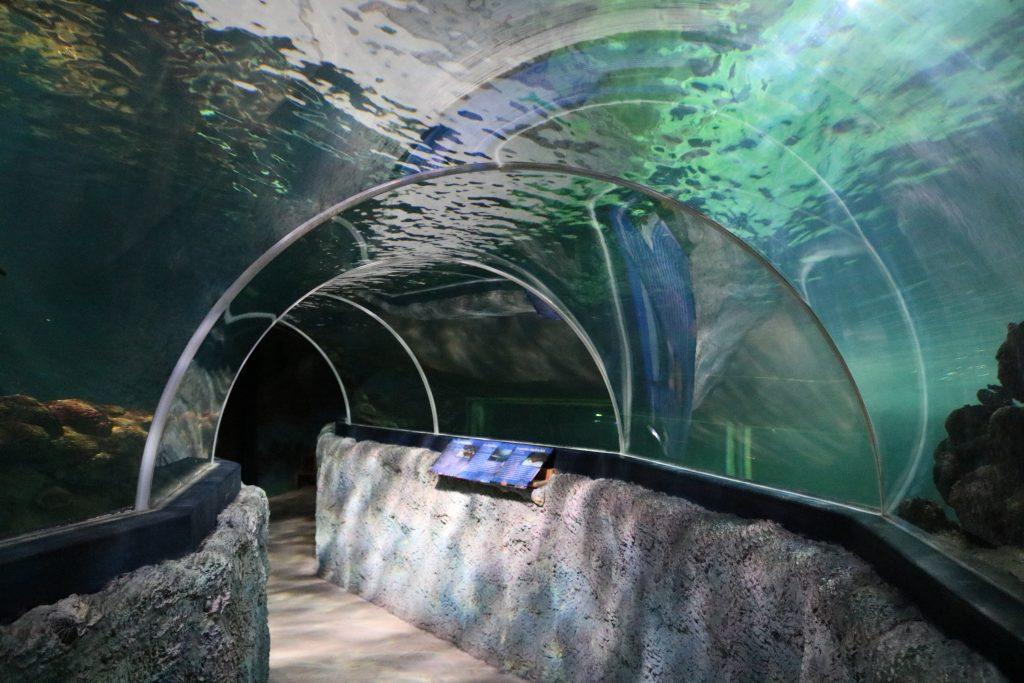 Sylt-Aquarium-15