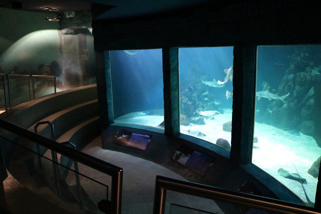 Sylt-Aquarium-18