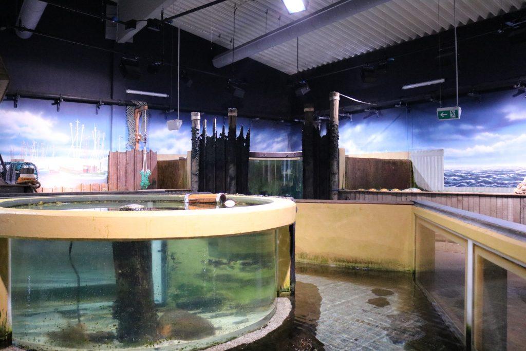 Sylt-Aquarium-23